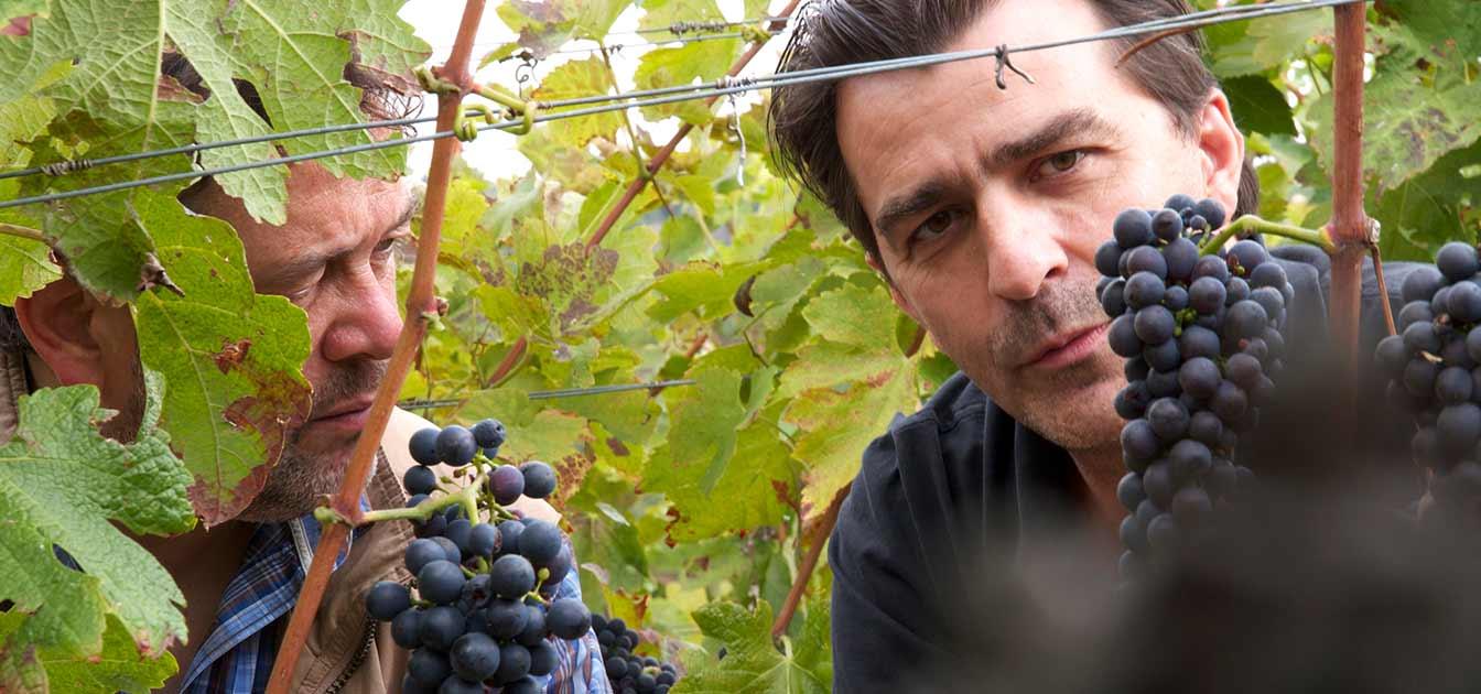 M. Chapoutier (Rhône)