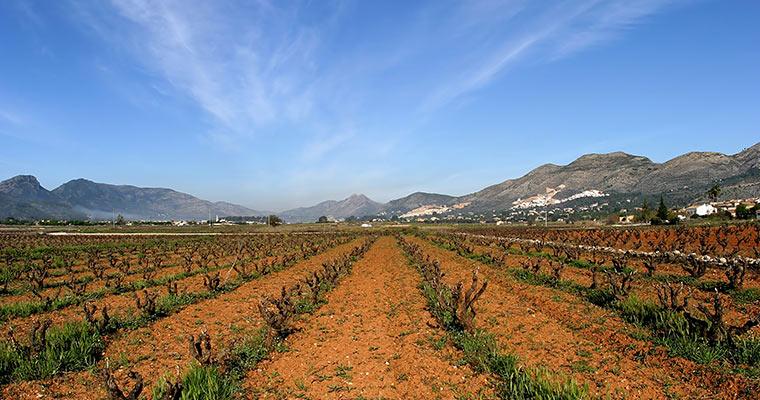 Spanien und seine Weine