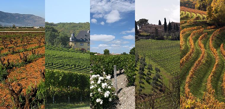 Große Weinverkostung – World Wide Wine Walk